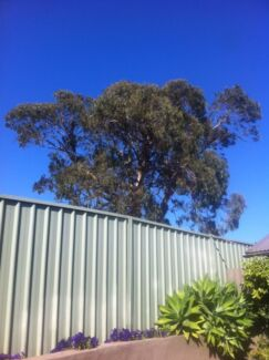 WANTED someone to cut down large gum tree, free or cheap help needed Broadmeadow Newcastle Area Preview