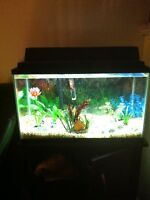 Fish Tank 10 Gallon with Espresso Solid Wood Stand