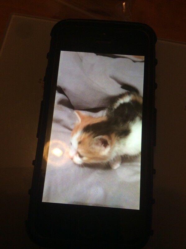 Last 2 kittens left