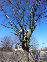 Tree Pruning, Tree Removal, Tree thinning!! **No Job too small**