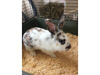2 Rabbits & cage for sale.