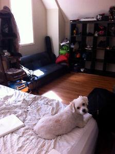 One Bedroom Apartment Condo