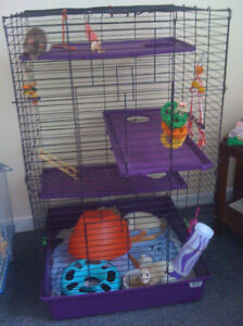 4 young male rats and large cage