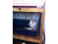 1year old female rabbit free to good home