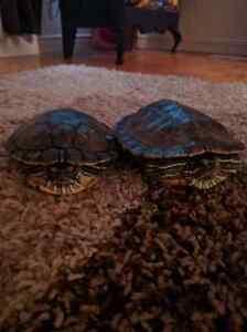 Free turtles