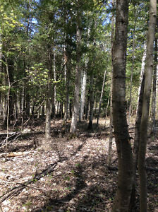 Beautiful 1 Acre treed lot - Bonfield On.