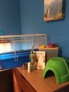 Guinea pig cage and  accessories Kitchener / Waterloo Kitchener Area image 1
