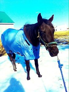 9 year old thoroughbred mare