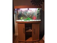 JEWEL 180L VISION BOW FRONTED FISH TANK