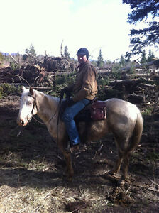 """2013 ApHcc filly """"Im Mighty Brite Lady"""" Williams Lake Cariboo Area image 4"""