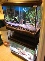 AQUARIUM - DUAL 20 GALLON TALL PACKAGE WITH STAND