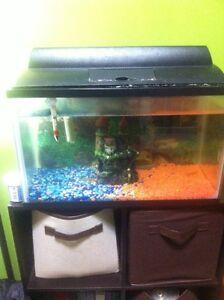 5 gallon fish tank with 4 guppy fish