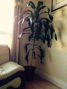 tree with pot (fake)