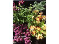 Plants flowers garden