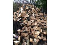 Logs sycamore silver birch