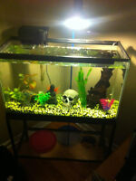 29 gallon tank with 13 convicts