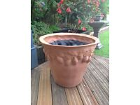 Citrus planter 60cm high x 67cm wide