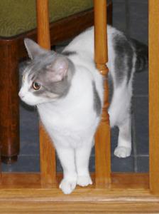 Loving home needed for friendly female cat