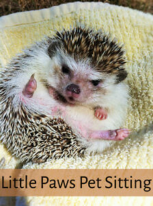 "Pet Sitter ""Little Paws Pet Sitting""for Avian/Pocketpets/Reptile"