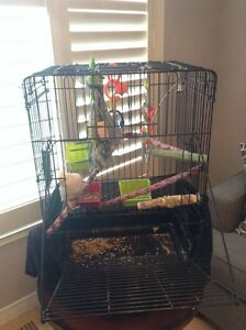 White cocktail with cage and toy $200