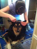 Well Groomed Mobile Pet Grooming Services