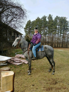 Awesome Trail Horse - Gelding