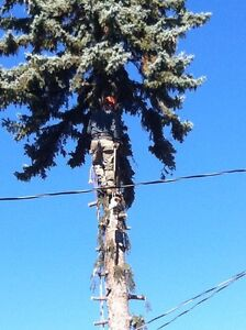 Tree trimming and removal services  London Ontario image 8