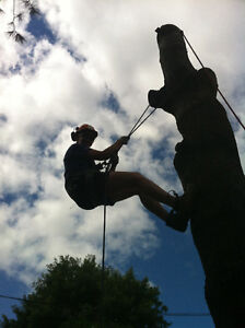 Well Established Tree Care Business for Sale
