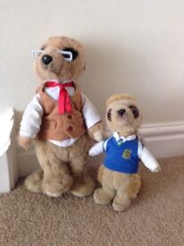 Two new meercats