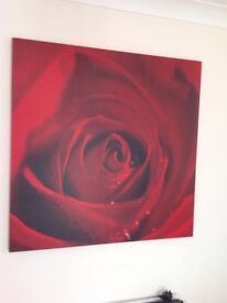 Large rose picture