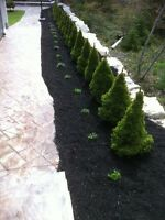 Sod Installation and Backyard Makeover (BOOK NOW)