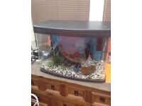 Fish tank from pets at home