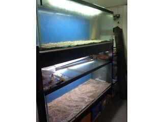 6ft aquariums