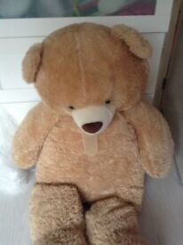 4foot teddy