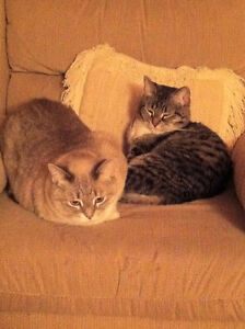 Family seeking loving home for two affectionate cats