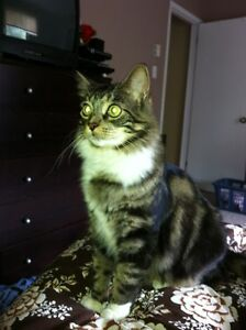 Lost cat-Kimble Dr/Wilsey Rd area