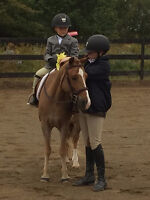 Super small pony offered for sale