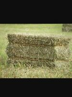 1000 Square bales of hay for sale