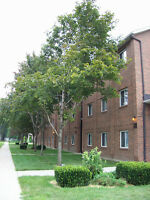 STUDENT HOUSING AVAIL FOR MATURE U WINDSOR STUDENTS