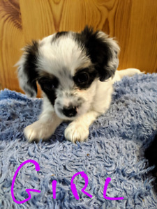 Jack Russell | Adopt Dogs & Puppies Locally in Ontario