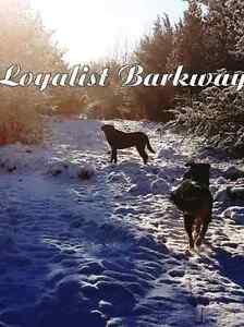 Loyalist Barkway Boarding Kennels