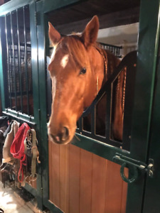 Looking for volunteers or co op students for horse facility
