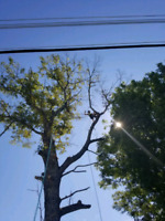 Sherwood Forestry - affordable tree service