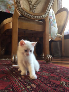 Cute kitten looking for a loving home.
