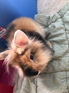 Girl bunny 4 months old