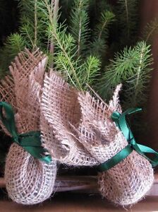 Tree Seedlings for Weddings, Earth Day, Birthdays, Promotions North Shore Greater Vancouver Area image 3