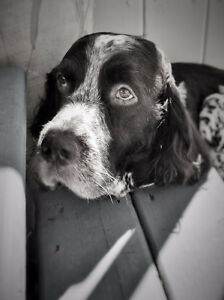 Salty Dog Pet Grooming & Photography