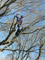 Tree care.  Brandon and area