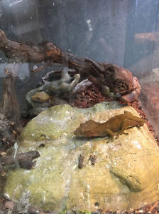 FREE lizards with terrariums.