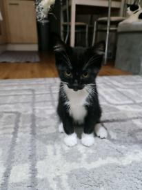 Kitten 😸